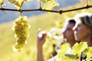 Napa Valley Wine Tours to TRy in 2020