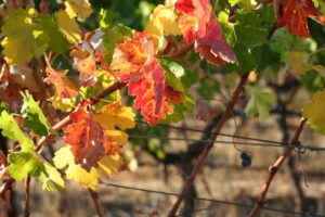 10 Fun Fall Things to Do in the Napa Valley