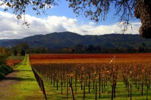 Fall Harvest Napa Valley
