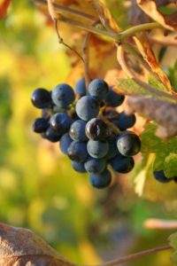 Favorite Napa Wineries