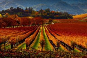 Napa Valley Fall Activities