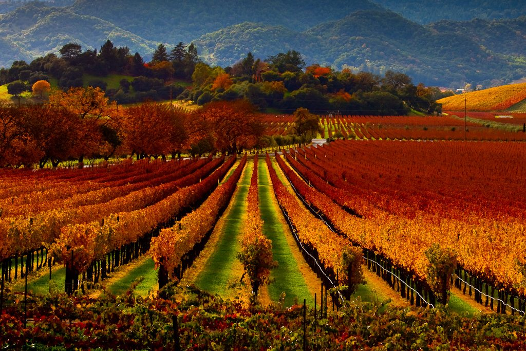 Napa Valley Fall wine tours