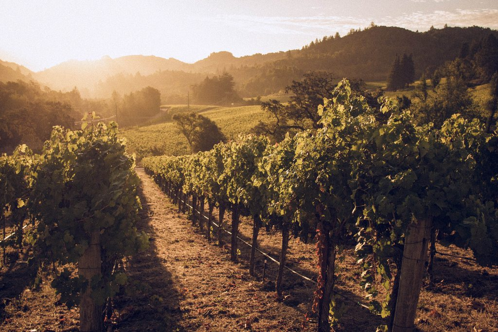 Damaging Wildfires, but Napa is still open for business