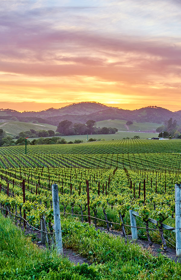 3 day Guide to Napa Valley
