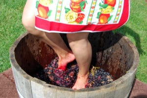Annual Grape Stomps and Other Wine Harvest Events in Napa and Sonoma