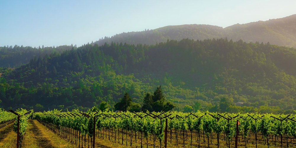 The Best Things to do in Downtown Napa This Summer