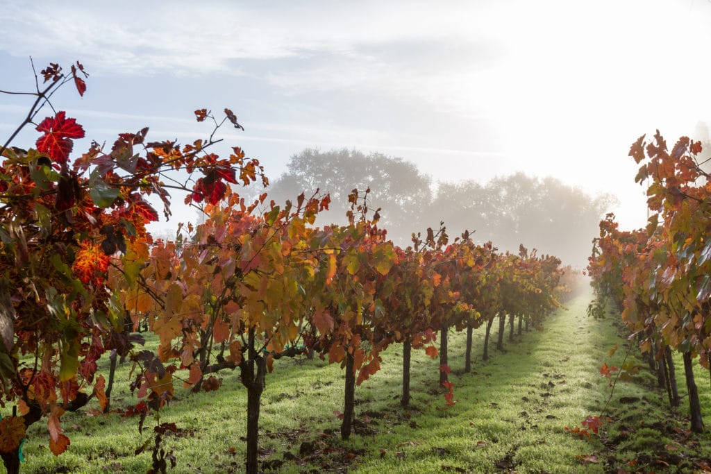 The 10 Best Napa Valley Wine Tours to Take This Fall