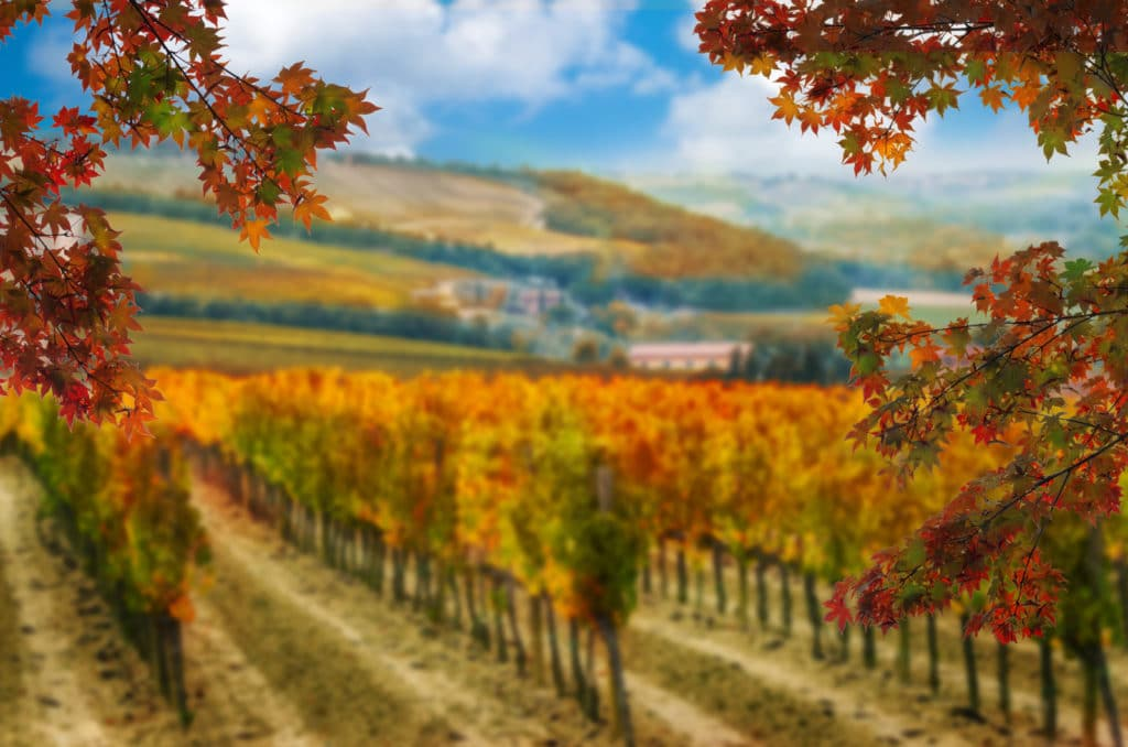 Our 10 Favorite Things to do in Napa Valley This Fall